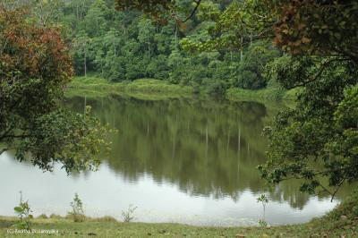 Hiyare, Galle - mini forest reserve